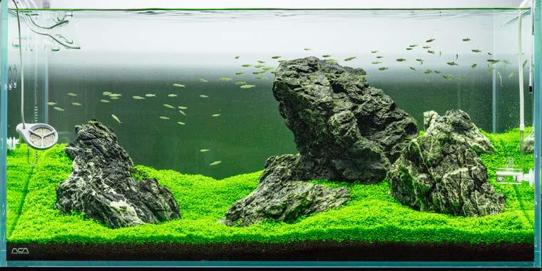 cuidados de plantas tapizantes acuario