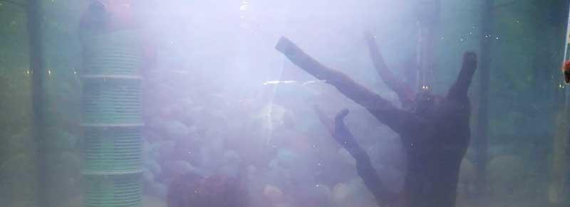agua blanca en acuario eliminar