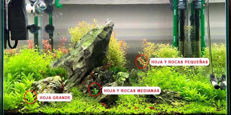 plantas para aquascaping