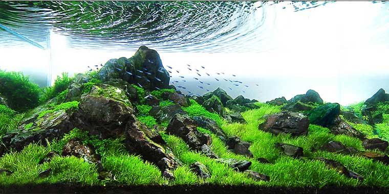 diseño aquascaping