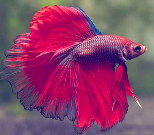 variedades de peces tropicales